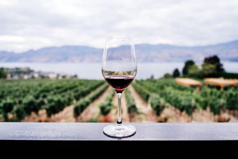vini naturali cosa sono