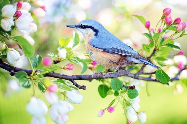 aforismi primavera